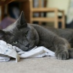 Kitty photos – now with artistic blurry stuff!