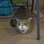 Kitties! (And a tiny bit of organizational stuff)